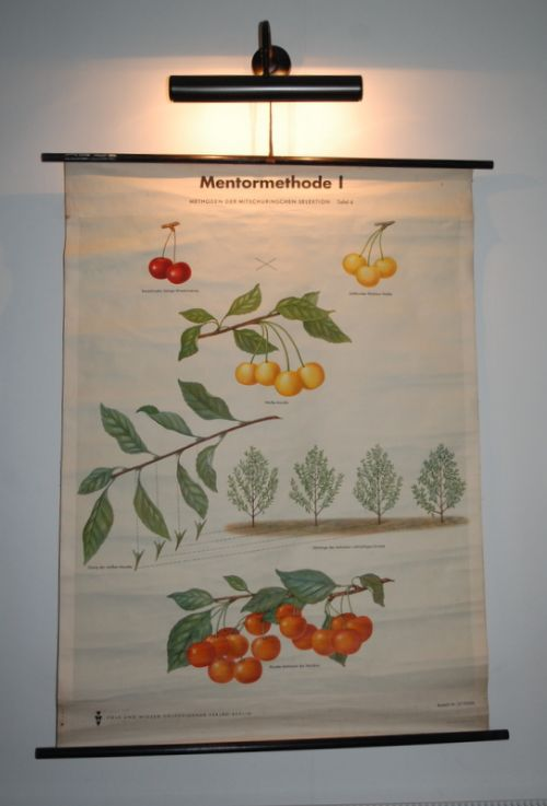 vintage retro school pull down chart decorative wall poster geneticsthe mentor method
