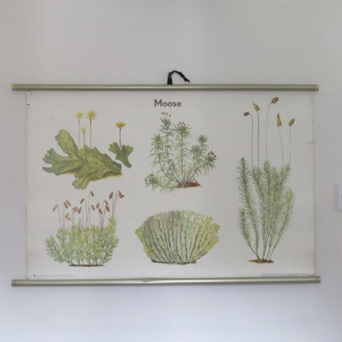 vintage mid century linen backed school chart biology mosses